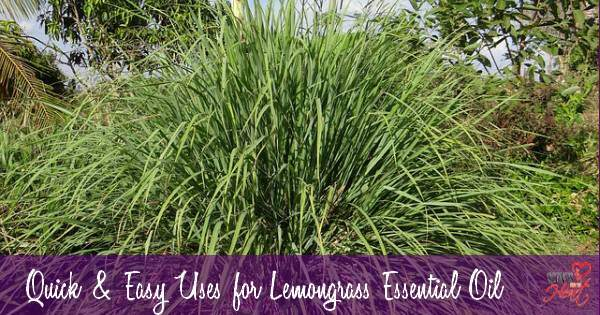 Quick and Handy Uses for Lemongrass Essential Oil